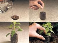 Выращиваем рассаду в торфяных таблетках