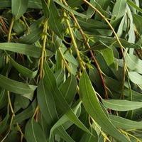 Чудеса природы, помогающие растениям выжить