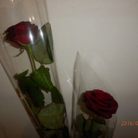 Моя днюшечка и цветочные подарки!!!
