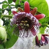 Хитрости растений