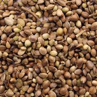 Семена: что нужно знать перед посевом