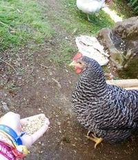 Синдром цыпленка?