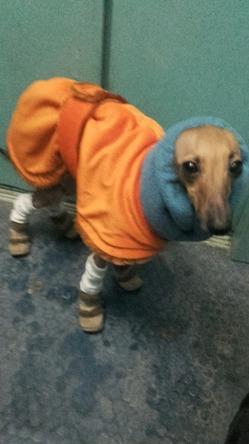 Клеопатра на прогулке, ну очень холодно!!!