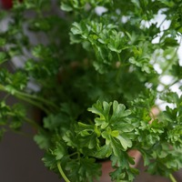 Витаминная зелень на подоконнике