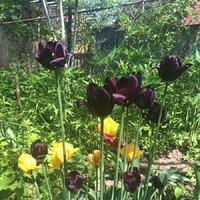 Цветы весны 2015.