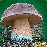 Пойдём в сад за грибами?