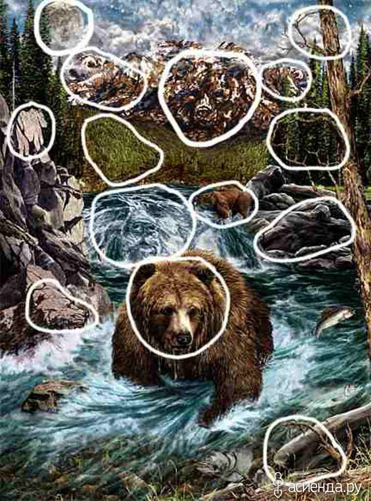 Ответ сколько медведей на картинке