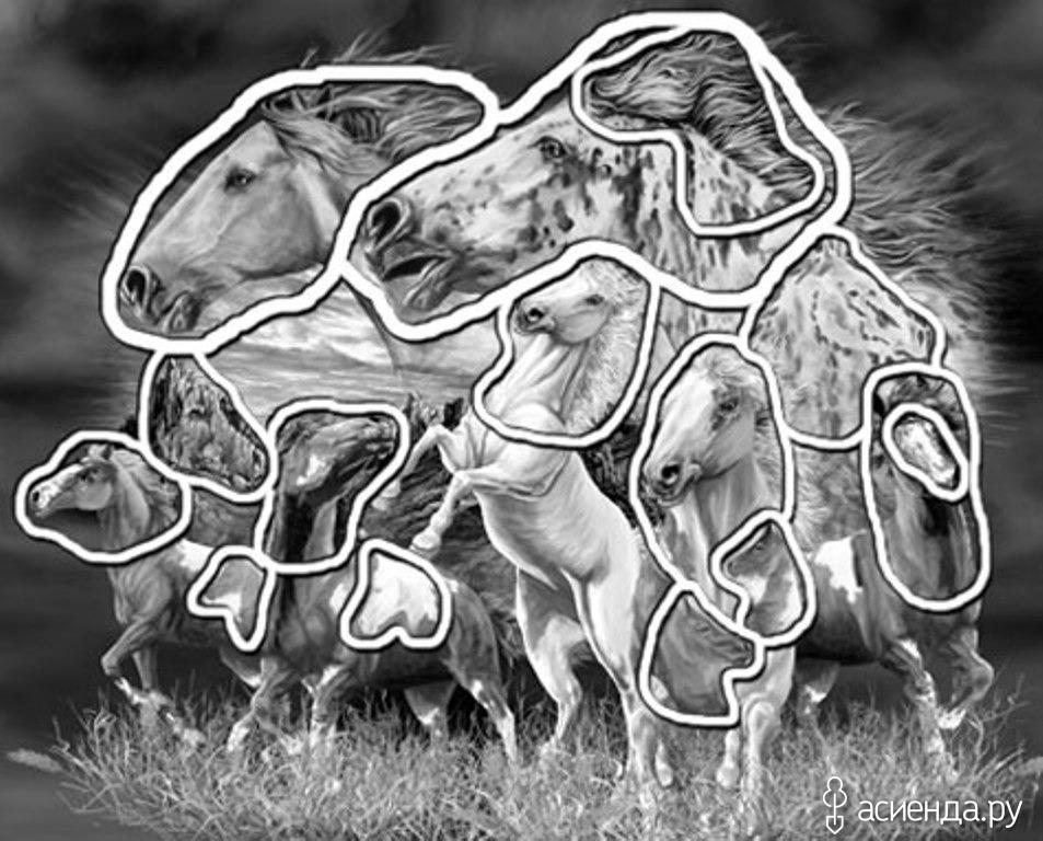 картинка из животных найди верблюда