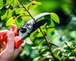 Особенности обрезки растений