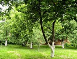 Что посадить в тени под деревьями
