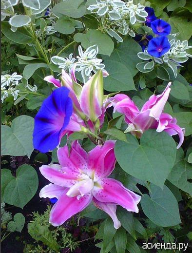 аллергия на лилии симптомы