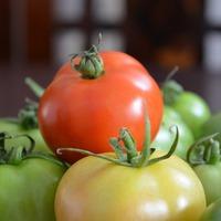 Как ускорить созревание томатов?