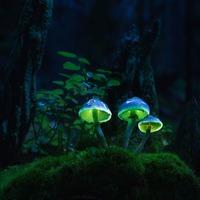 Сказочные грибы