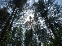 Хакасия. В лесу. Небо.
