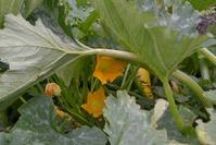 Удобрение для кабачков