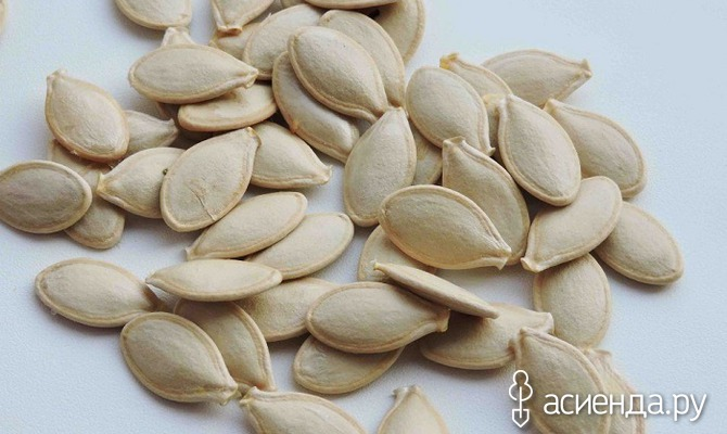 Посадка кабачков в грунт семенами