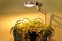 Лампы для рассады растений