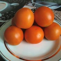 Первый урожай грунтовых помидор. Персик.