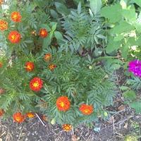 Во дворе у нас цветочки...