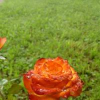 Моя любимица и еще цветы