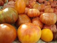 Урожай томатов 2016.