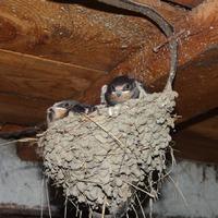 Ласточкино гнездо в отдельно взятой деревне!