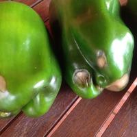 Проблема с плодами перцев
