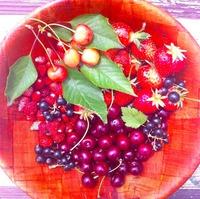 Наш урожай ягод