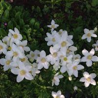 Немножко цветочков