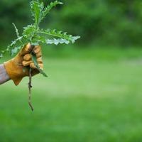 Борьба с сорняками: эффективные методы и средства