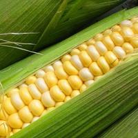 Как правильно хранить кукурузу