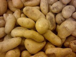 Как распознать болезни картофеля? Часть 1