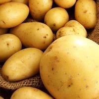 Болезни картофеля. Часть 2