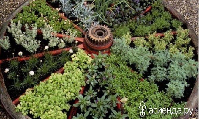 А вы посадили пряную зелень?