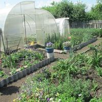 Моё садово-огородное хозяйство на 2016г.