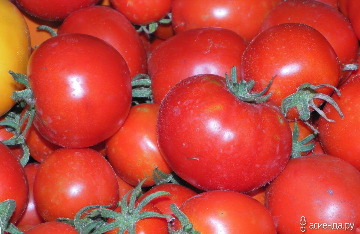 томат клубничное дерево отзывы фото урожайность сахарную