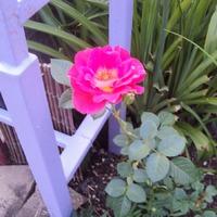 Мой огородик