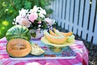 Арбуз и дынька: сладкая парочка в огороде и парнике