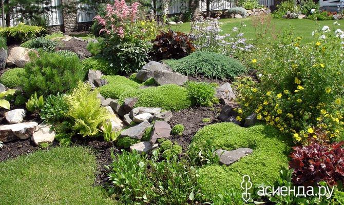 Как сделать изысканный каменистый цветник
