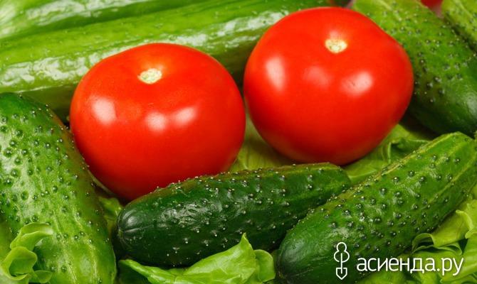 Несколько слов о подкормке огурцов и томатов