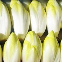 Цикорий салатный