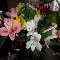 С праздником Весны, милые ассиендушки!!!