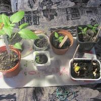 И вот часть растюх. остальные еще не посадила.