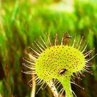 Растения мстители