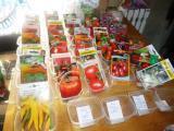 Посадка семян в пластиковых контейнерах