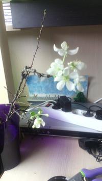 А у меня дома весна)))