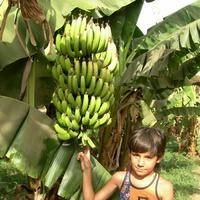 Универсальный Банан