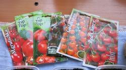 Просто выращиваем помидоры...