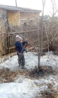 Мой мужчина окультуривает яблоньку :)