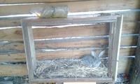 Вот и переехал кролик из дому в новую жил площадь :)